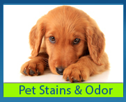 pet stain and odor removal by Amarillo Dry Carpet Cleaning 806-553-2077